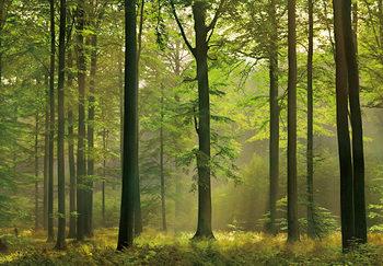 AUTUMN FOREST Fototapeta