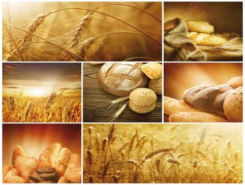 chlieb, klasy, žito, pole Fototapeta