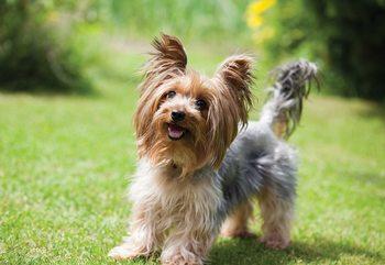 Dog Fototapeta