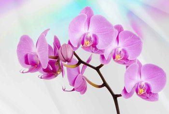 Flowers  Orchids Fototapeta