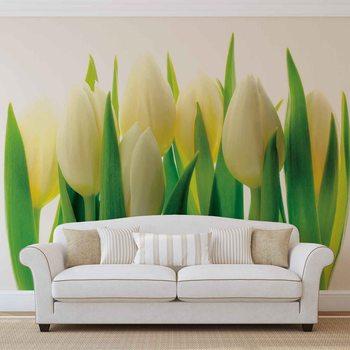Flowers Tulips Nature Fototapeta