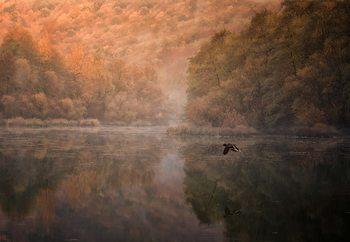 Flying Reflection Fototapeta