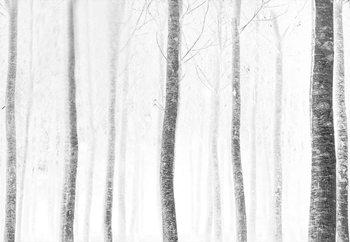 Forest Fototapeta