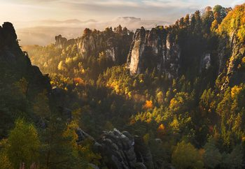 Forest Whispers Fototapeta