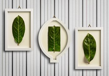 Framed Nature Fototapeta