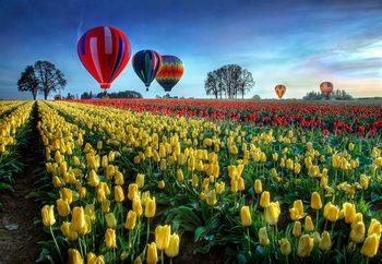 Hot Air Balloons Over Tulip Field Fototapeta