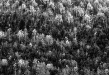 Nature Fototapeta