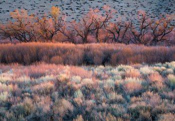 Nature'S Paintbrush Fototapeta