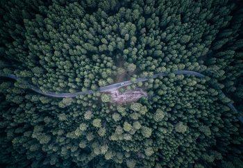 Road Through The Forest Fototapeta
