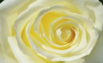 Rose Flower White Yellow Fototapeta