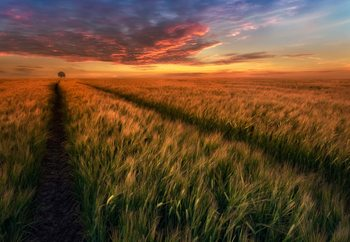 Somewhere At Sunset Fototapeta
