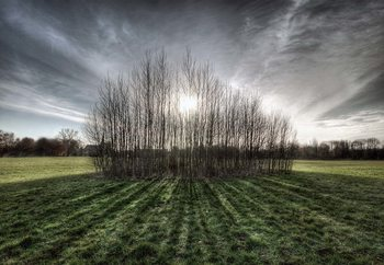 Sticky Trees Fototapeta