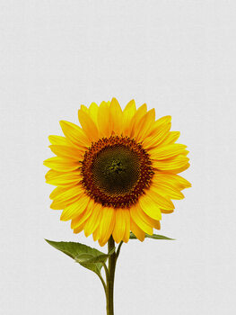 Sunflower Still Life Fototapeta