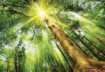 Sunshine Trees In The Forest Fototapeta