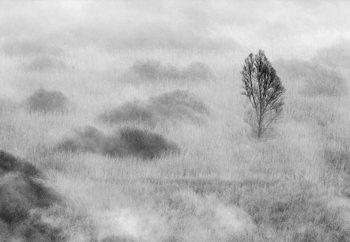 Swamp's Tree Fototapeta