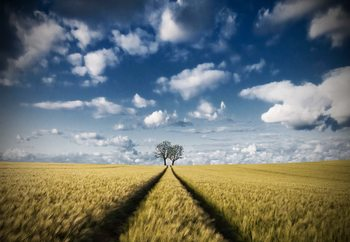 The Way To The Trees Fototapeta