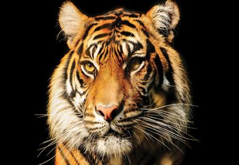 Tiger Fototapeta