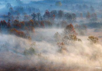 Trees In The Early Morning Fog Fototapeta