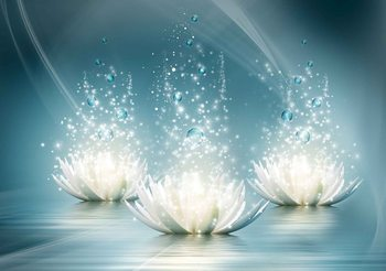White Lotus Flowers Drops Fototapeta