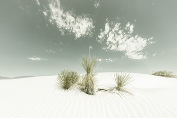 White Sands Vintage Fototapeta