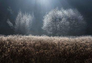 Winter Field Fototapeta