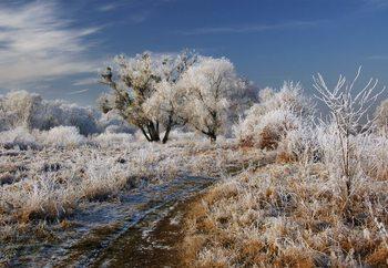 Winter Has Arrived Fototapeta