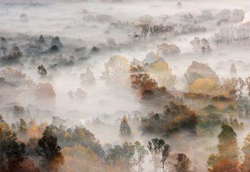 Autumn Colours In The Fog Fototapete