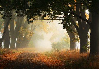Autumn In Poland Fototapete