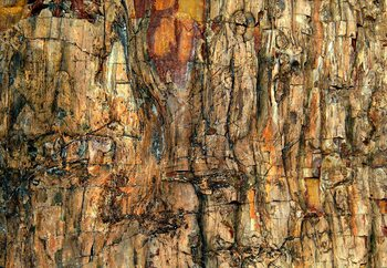 Bark Fototapete