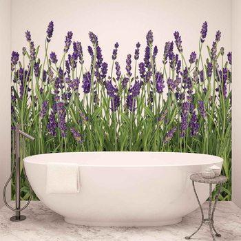 Blumen Lavendel Fototapete