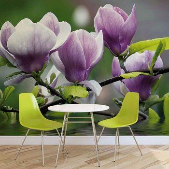 Blumen Magnolien Wasser Fototapete