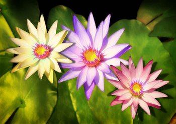 Blumen Natur Fototapete