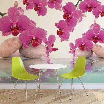 Blumen Orchideen Fototapete