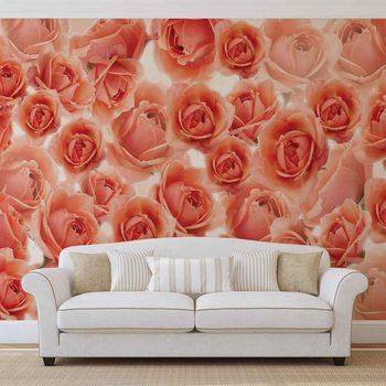 Blumen Rosen Rot Fototapete