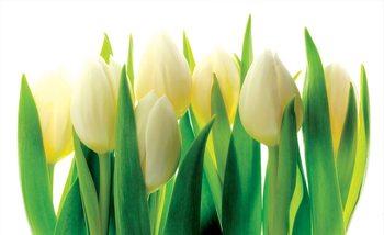 Blumen Tulpen Natur Fototapete