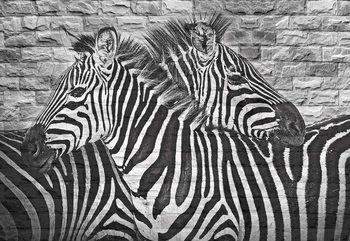 Brick Wall Zebras Fototapete