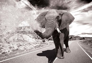 Elephant Highway Black And White Fototapete