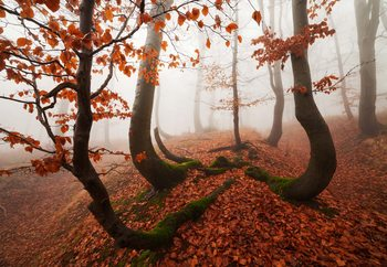 Fairytale Forest Fototapete