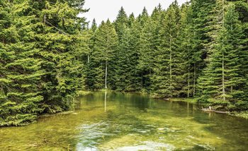 Fluss Wald Natur Fototapete