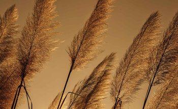 Gräser Natur Sepia Fototapete