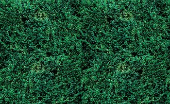 Gras Textur Fototapete