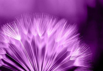 Löwenzahn Blume Fototapete