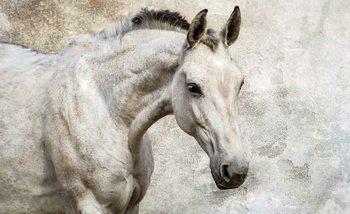 Pferd Fototapete