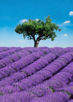 PROVENCE Tapete