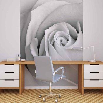 Rose Blume Fototapete