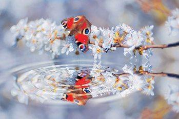 Schmetterling Blumen Wasser Fototapete