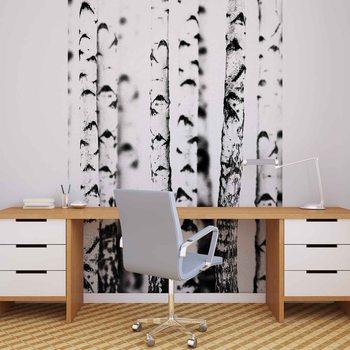 Schwarz Weiß Bäume Wald Natur  Fototapete