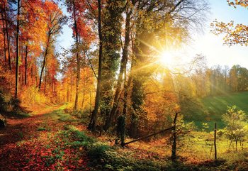 Sunrise In Autumn Forest Fototapete