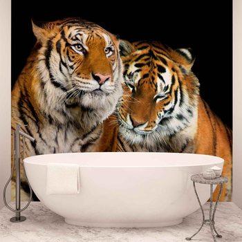 Tiger Tiere Paar Fototapete