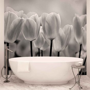 Tulpen Blumen Schwarz Weiß Fototapete